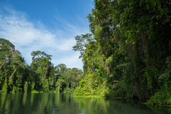 Flussfahrt im Dschungel Stockfotografie