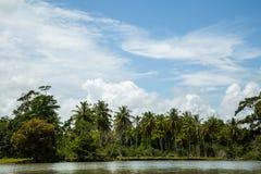 Flussfahrt im Dschungel Stockbild