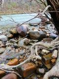 Flussfelsen stockfotografie