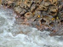 Flussfelsen Stockbilder