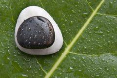 Flussfelsen auf einem grünen Blatt Stockfotos