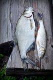 Flussfische über altem hölzernem Stockfotos