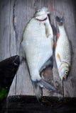 Flussfische über altem hölzernem Lizenzfreies Stockfoto