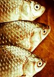 Flussfische Stockbild