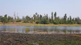 Flussfluß mit Wald an der Rückseite Lizenzfreie Stockfotos