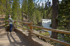 Flussfluß und Waldzentrale Oregon Stockfoto