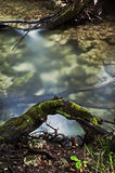 Flussfluß unter eine große Baumwurzel Stockbild