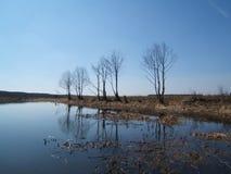 Flussfrühling Stockbild