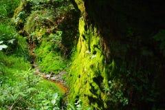 Flussfrühling im Nationalpark Tscheche die Schweiz Stockfoto
