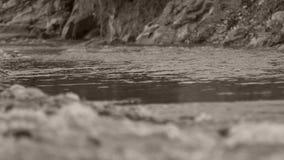 Flussi del fiume archivi video