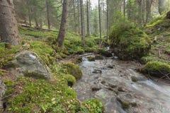 Flussi di corrente nella foresta, alpi italiane Fotografie Stock