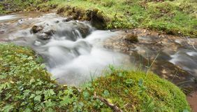 Flussi di corrente nella foresta, alpi italiane Fotografia Stock