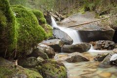 Flussi di corrente nella foresta, alpi italiane Immagini Stock Libere da Diritti