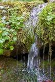 Flussi piccoli di torrente montano giù il pendio sopra erba e muschio immagine stock
