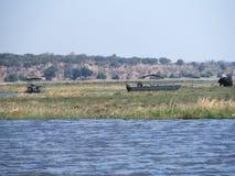 Flusskreuzfahrt in Nationalpark Chobe Stockbilder