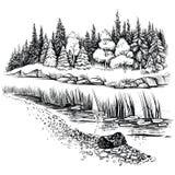 Flusslandschaft mit Nadelbaumwaldvektorillustration