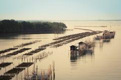Flussleben-Waldhimmel Lizenzfreie Stockfotos