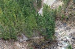 Flussnatur Stockbild