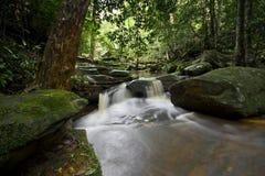 Flusso 3 della foresta Fotografia Stock