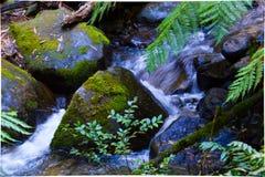 flusso Fotografia Stock