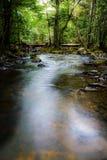 Flusso alla foresta fotografia stock