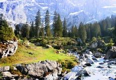 Flusso alpino della sorgente Fotografia Stock