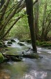 Flusso boscoso fotografia stock libera da diritti