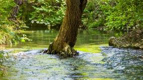 Flusso calmo di un fiume della montagna video d archivio