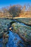 Flusso congelato un giorno di inverno pieno di sole Fotografia Stock Libera da Diritti