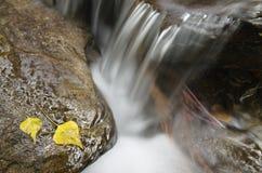 Flusso continuo dell'acqua fra le rocce con le foglie di autunno fotografia stock