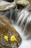 Flusso continuo dell'acqua fra le rocce con le foglie di autunno immagini stock