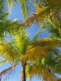 Flusso continuo leggero di Sun attraverso le palme immagine stock