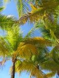 Flusso continuo leggero di Sun attraverso le palme immagine stock libera da diritti