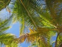 Flusso continuo leggero di Sun attraverso le palme immagini stock libere da diritti