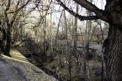 Flusso del fiume Immagini Stock
