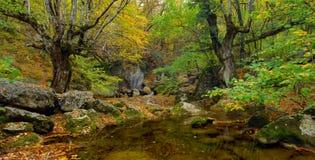 Flusso del fiume in alta montagna in autunno Fotografie Stock