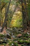 Flusso del fiume in alta montagna in autunno Immagine Stock