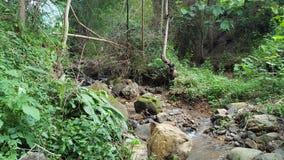 Flusso del fiume con scarico basso con chiarezza intatta immagini stock libere da diritti
