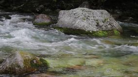 Flusso del fiume della montagna nella foresta video d archivio