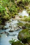 Flusso del fiume di Rican della Costa Fotografie Stock Libere da Diritti