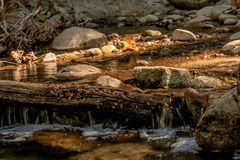 Flusso del fiume nel legno Fotografia Stock