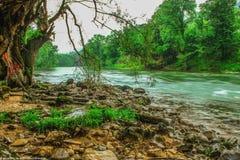 Flusso del fiume nella foresta Fotografie Stock