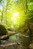 Flusso del moutain della foresta Immagini Stock