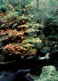 Flusso del terreno boscoso Immagine Stock
