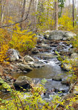 Flusso del terreno boscoso Fotografia Stock