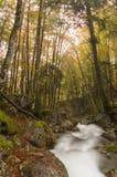 Flusso del terreno boscoso all'inizio dell'autunno Fotografie Stock
