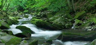 Flusso del terreno boscoso. Formato di XXL. Immagine Stock Libera da Diritti