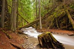 Flusso dell'acqua della montagna Immagine Stock Libera da Diritti