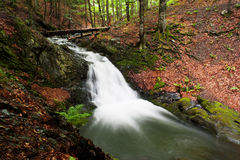 Flusso dell'alta montagna in foresta Immagini Stock Libere da Diritti