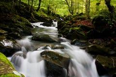 Flusso dell'alta montagna in foresta Fotografie Stock Libere da Diritti